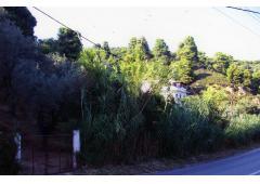 Skiathos island property of 4,500 sm