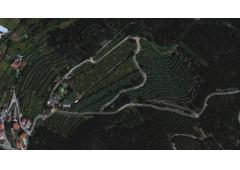 Villa, vineyard and kiwi plantation