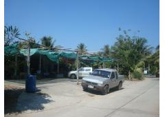 Home with Fruit Garden and Convenient Shop