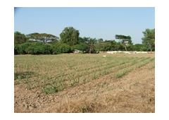 Land for sale 4 acres 46 square wah in Chiangmai (Thailand)