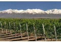 land agro from Argentina.(VINEYARDS) pre/mountain