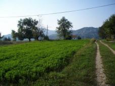 3 PLOTS  OF LAND FOR SALE  IN GRAHOVO